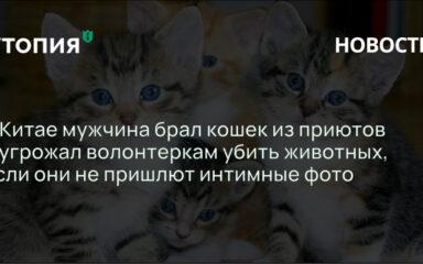 В Китае мужчина брал кошек из приютов и угрожал волонтеркам убить животных, если они не пришлют интимные фото